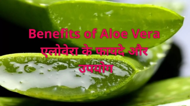 12 unique benefits of aloe vera juice, such panacea benefits, you will be surprised to know/ World Creativities