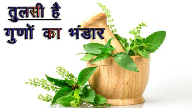 These diseases stay away from eating basil on an empty stomach, follow these tips/World Creativities
