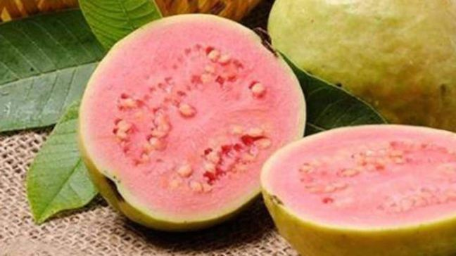These are amazing benefits of eating guava, if you know then you will eat it everyday/WorldCreativities