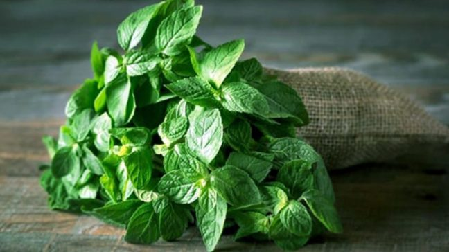 From health to hair, green mint leaves are very useful/WorldCreativities
