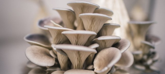 5 health benefits of eating Oyster Mushroom, let's know/WorldCreativities