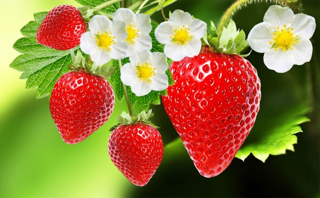 Eating strawberries reduces stress, and there are many benefits./WorldCreativities