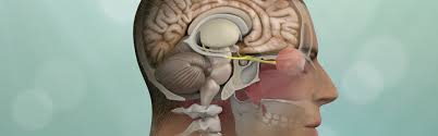 Complete information about brain surgery, learn how to do brain surgery/WorldCreativities