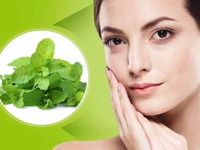 Pudina | Ayurvedic benefits, uses and medicinal properties of mint/WorldCreativities