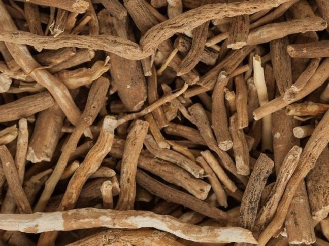 world creativities You will be surprised to know the medicinal benefits of Ashwagandha