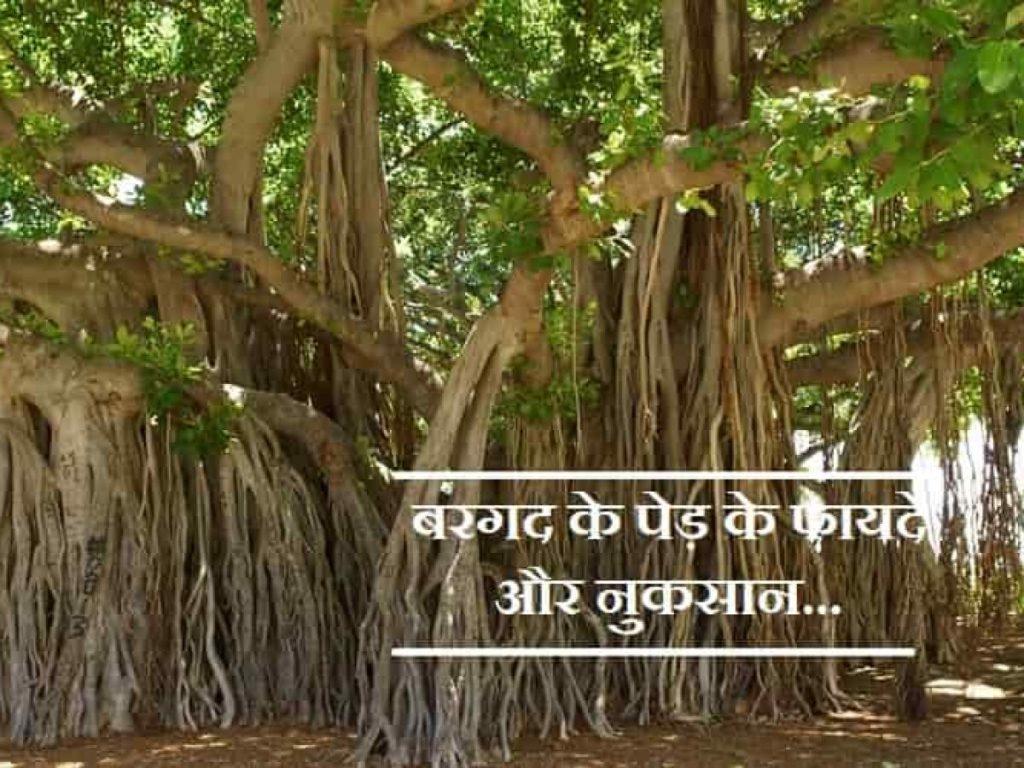 Benefits of banyan bark