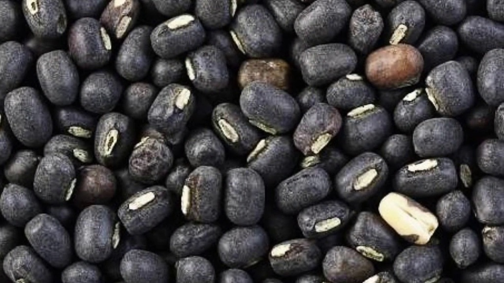 You will be surprised to know the benefits of eating black lentils