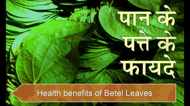 20 other amazing benefits of betel leaf