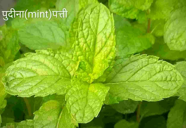 world creativities You will be shocked knowing the benefits of mint.