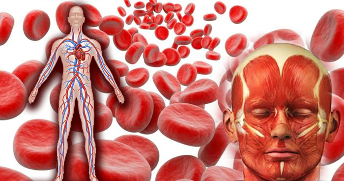 world creativities These 5 fruits make you stronger by increasing blood in the body