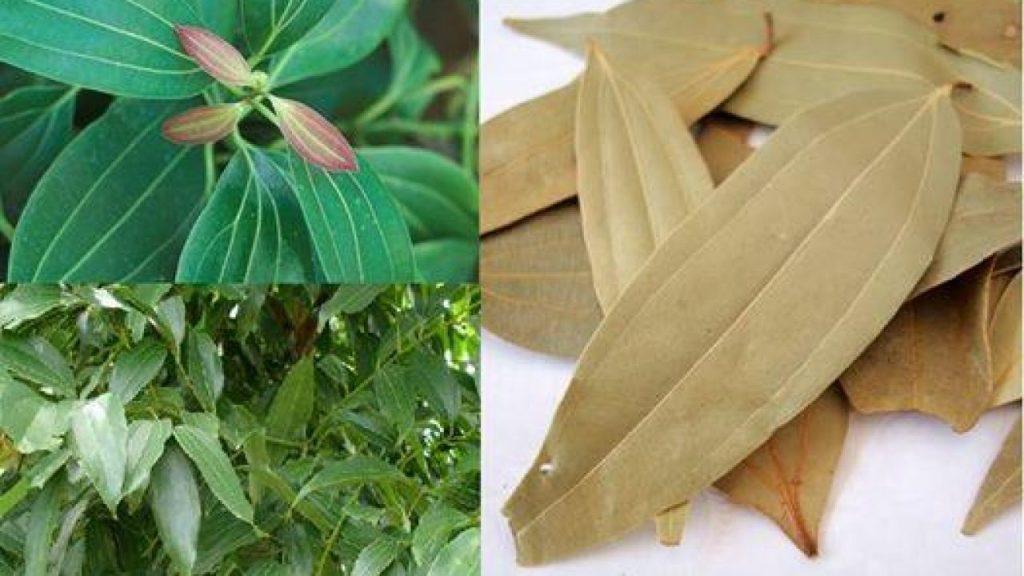 Benefits of bay leaf Ayurvedic treatment