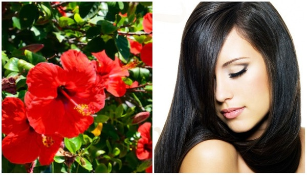 world creativities Hibiscus flower enhances the beauty of hair, use it like this