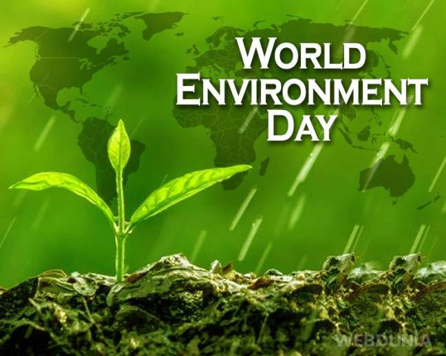 world creativities World Environment Day 2021: Keeping these 8 plants at home increases oxygen level, purifies air