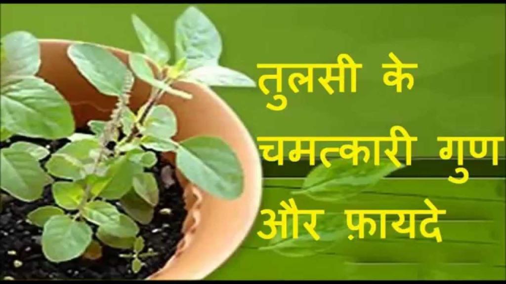 www.worldcreativities.com Tulsi benefits, uses and medicinal properties